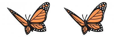 monarch butterflies icon