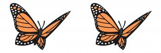 illustration of two monarch butterflies